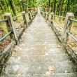 Stairway in the jungle — Stock Photo #40151789