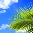 Stock Photo: Green palm frond