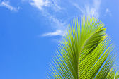 Green palm frond — Stock Photo