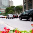 Plants on Fifth Avenue, New York - Stock Photo