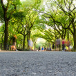 The Mall, Central Park, New York — Stock Photo