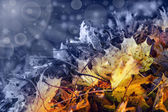 Abstract transition from autumn to winter time. — Stock Photo