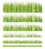 зеленая трава — Cтоковый вектор