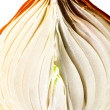 Golden onion — Stock Photo
