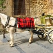 Traditional horse and cart at Cordoba - Stock Photo