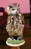 Falconry birds — Stock Photo