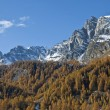 Autumn colors - Alp Devero - Stock Photo