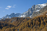 Autumn colors - Alp Devero — Stock Photo