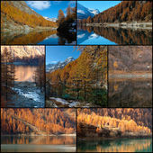 Autumn colors collage — Stock Photo