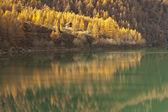 Autumn reflections on the lake — Stock Photo