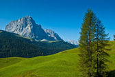 Group Sassolungo and forest, Dolomites — Stock fotografie