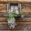 Window and flowers — Stock Photo