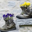 Flowers in boots — Stock Photo