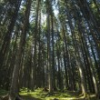 Forest in Trentino Alto Adige — Stock Photo