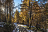 Mountain path in autumn season, Alpe Devero — Stock Photo