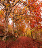 Autumn in the park of Campo dei Fiori, Varese — Stock Photo