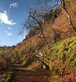 Mountain path in autumn season, Campo dei Fiori - Varese — Stock Photo