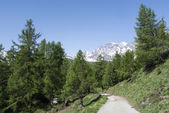 Devero Alp, mountain path through tre forest — Stock Photo