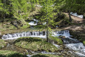 River in the forest of Devero Alp — Stock Photo