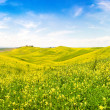Stock Photo: Beautiful Tuscany landscape with field of flowers in Val d'Orcia, Italy