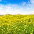 Beautiful Tuscany landscape with field of flowers in Val d'Orcia, Italy — Stock Photo #24224381