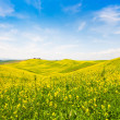 Beautiful Tuscany landscape with field of flowers in Val d'Orcia, Italy — Stock Photo #24224643