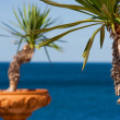 Royalty-Free Stock Photo: Palm trees in terra cotta pots with the ocean in the background in Italy, Europe