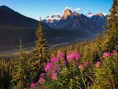 Vackert landskap med klippiga bergen vid solnedgången, banff national park, alberta, kanada. — Stockfoto