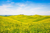 Beautiful Tuscany landscape with field of flowers in Val d'Orcia, Italy — Stockfoto