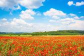 Prachtige landschap met gebied van rode papaver bloemen en blauwe hemel in toscane, italië — Stockfoto