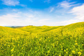 Beautiful Tuscany landscape with field of flowers in Val d'Orcia, Italy — Stock Photo