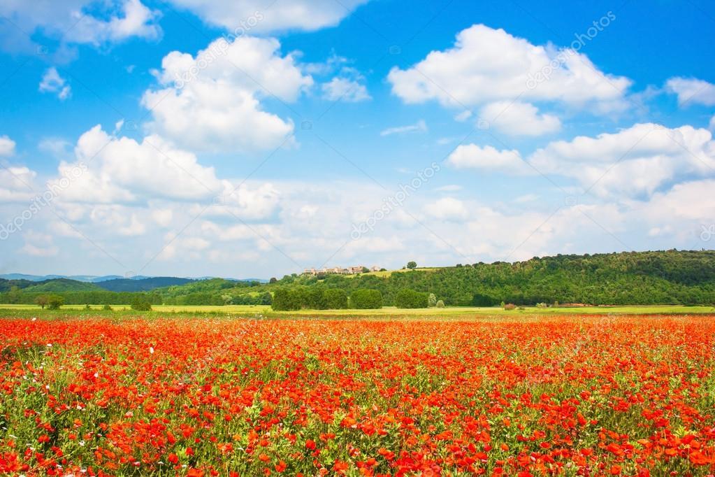 live flower wallpaper for pc