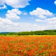 Beautiful landscape with field of red poppy flowers and blue sky in Tuscany, Italy — Stock Photo