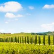 Panoramic view of scenic Tuscany landscape with vineyard in the Chianti region, Tuscany, Italy — Stock Photo