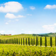 Panoramic view of scenic Tuscany landscape with vineyard in the Chianti region, Tuscany, Italy — Stock Photo #26386119