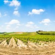 Panoramic view of scenic Tuscany landscape with vineyard in the Chianti region, Tuscany, Italy — Stock Photo #29626245
