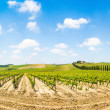 Stock Photo: Panoramic view of scenic Tuscany landscape with vineyard in the Chianti region, Tuscany, Italy