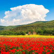 Beautiful landscape with field of red poppy flowers and traditional farm house in Monteriggioni, Tuscany, Italy — Stock Photo #38809525
