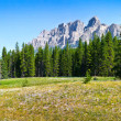 Panoramic view of beautiful landscape with field of flowers and Rocky Mountains in the background in Jasper National Park, Alberta, Canada — Stock Photo
