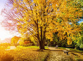 Beautiful autumn scene in park at sunrise — Stock Photo