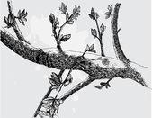 Silhouette monocromatica vettoriale di albero — Vettoriale Stock