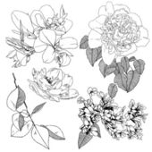 Vector set of hand drawn flowers for design — Stock Vector