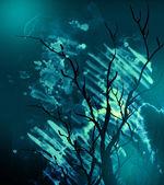 Mystery tree — Stock Photo