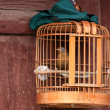 Stock Photo: Bird locked in a wooden cage.