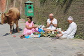 Bhatta priest-hindu faithfuls and cow. Pashupatinath temple-Deopatan-Kathmandu-Nepal. 0282 — Stock Photo