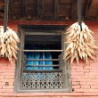 Stock Photo: Hanging corn ears. Bandipur-Nepal. 0396