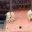 Stock Photo: Hanging corn ears. Bandipur-Nepal. 0397