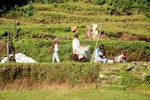 Nepali men renewing woolen mattress. Pothana-Nepal. 0546 — Stock Photo