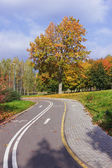 Bicycle track in the autumn park. — Stock Photo