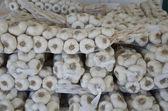 Farm fresh garlic — Stock Photo